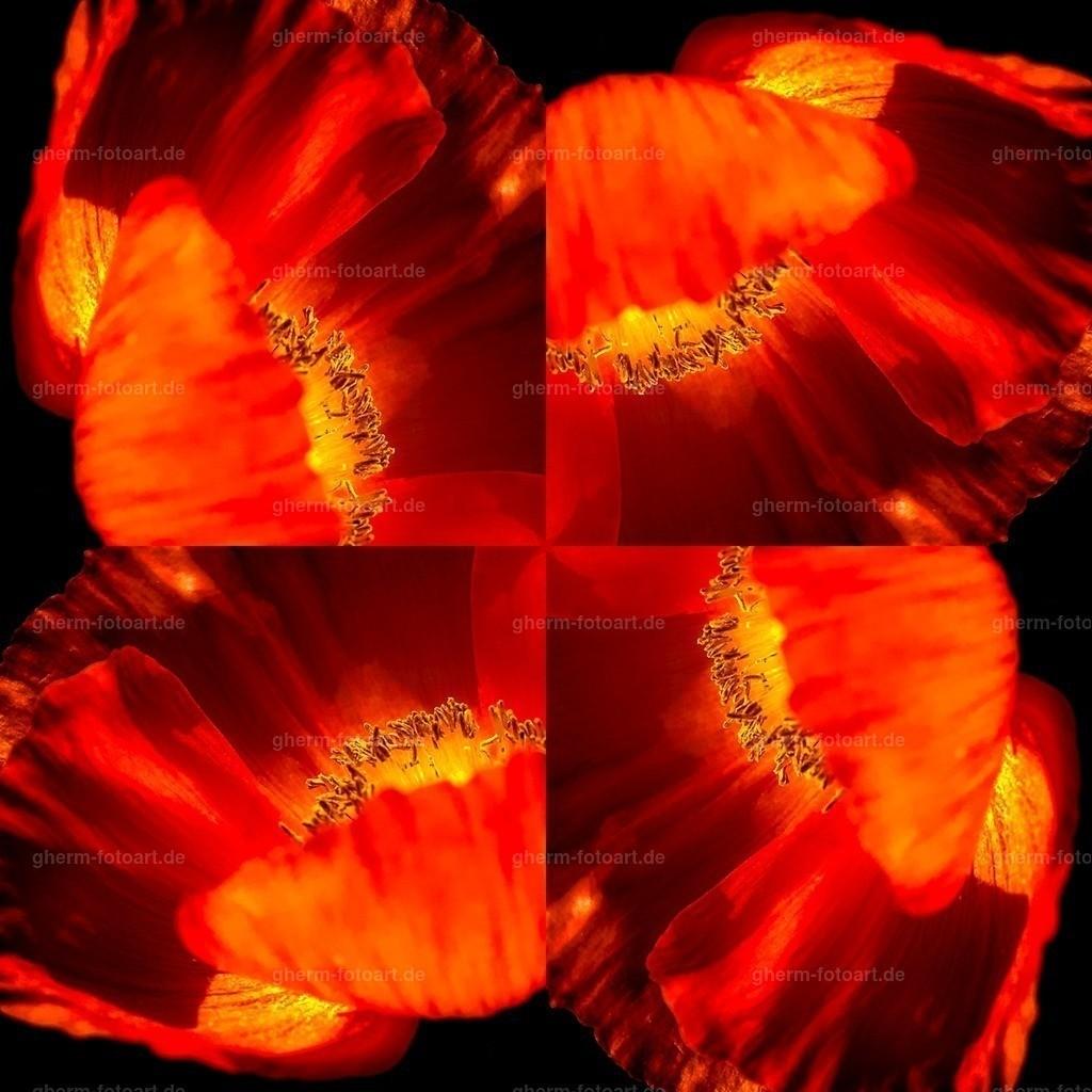 IMG00156-LR-korr-q-lmnr-kaleidoskop