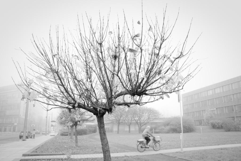 Dresden Ostra-Allee im Nebel   Aus der Serie