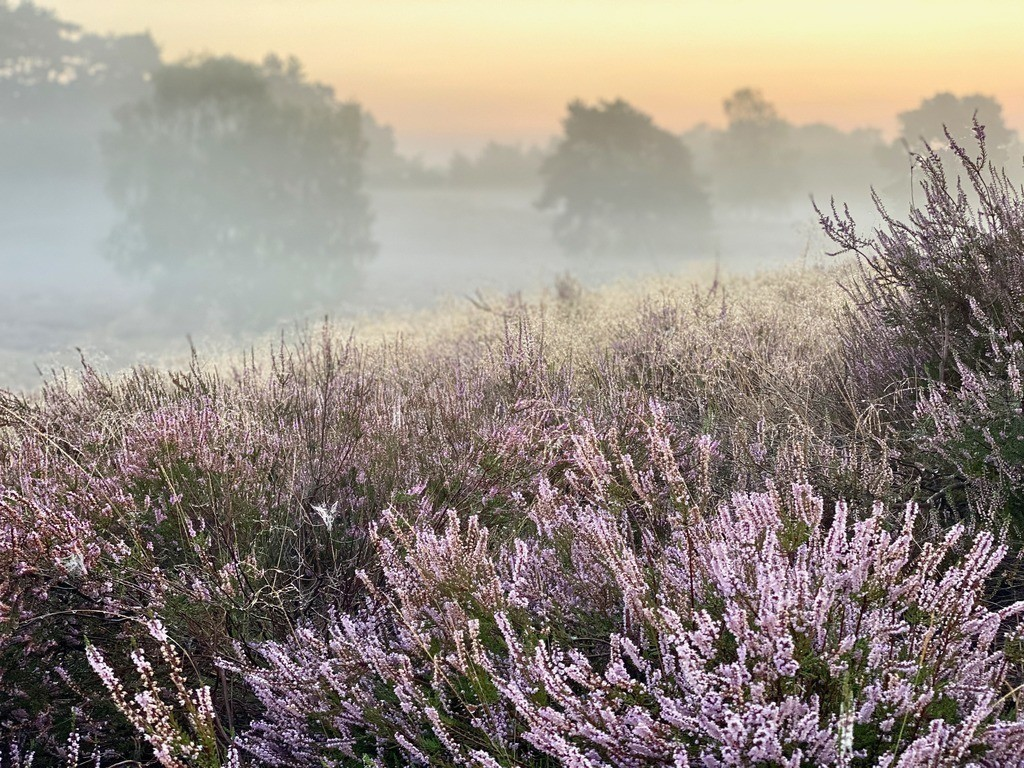 IMG_4542   Westruper Heide