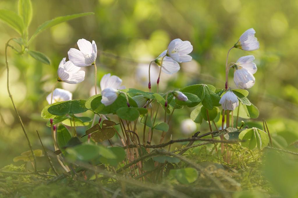 Blüte   Blumenmotiv