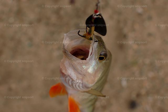DSC_7444 | Ein kleiner Fisch am Angelhaken