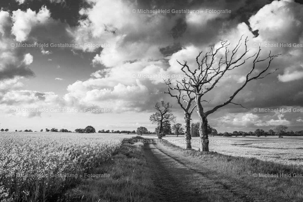 Alte Bäume am Feldweg