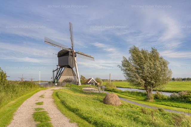 Windmühle in Kinderdijk | Idyllische Windmühle in Kinderdijk bei Rotterdam an einem frühen Abend im Sommer.
