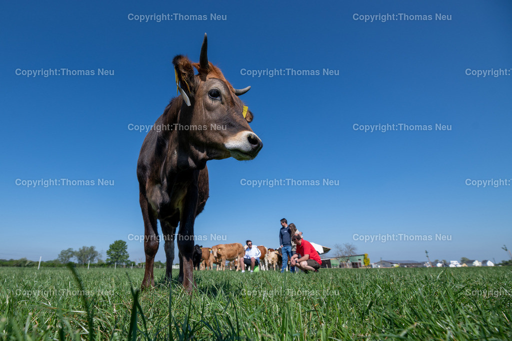 DSC_9982 | Bensheim, Schwanheim, FamilieSchweikert in Schwanheim nach 50 Jahren Viehhaltung jetzt mit ihren Rindern auf die Weiden, ,, Bild: Thomas Neu