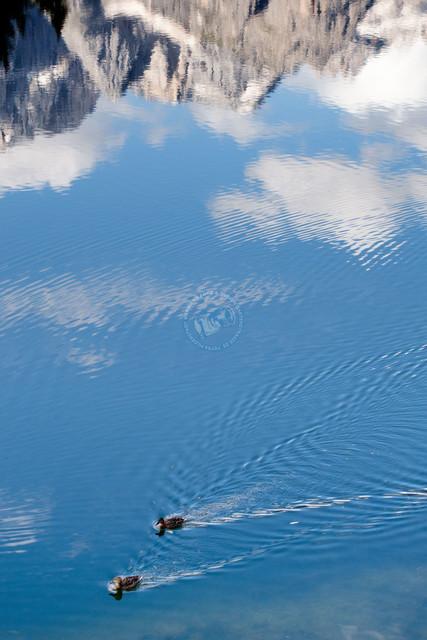Enten auf dem Lago di Misurina    ITA, Italien, Südtirol, Dolomiten, Sella Rondo, 15.07.2014, Lago di Misurina Südtirol Enten auf dem See, Spiegelung des Monte Cristallo im Wasser