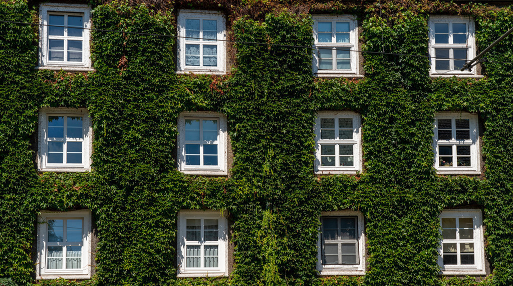 JT-200806 | Efeu Fassaden in Siedlung Margarethenhöhe, unter Denkmalschutz stehende Gartenstadt Siedlung, gebaut von 1906 bis 1938,  Essen, Deutschland