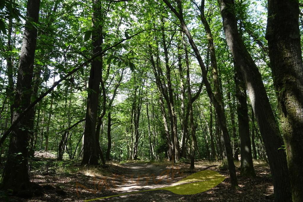 Schutzort Wald