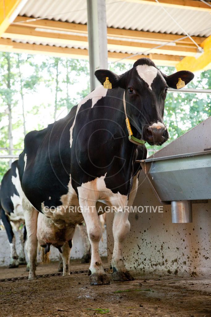 20110627-IMG_3062 | Milchkühe im Boxenlaufstall