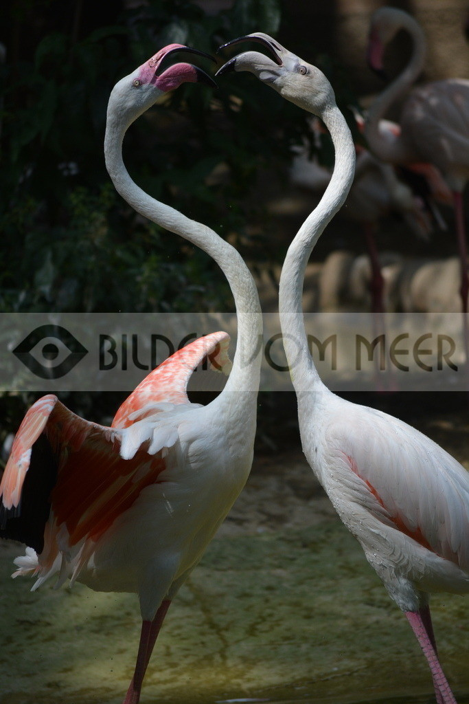 Fotoausstellung Meer Bilder | Flamingos aus Italien