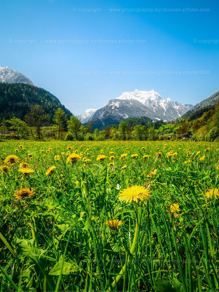 Frühling in Mayrhofen