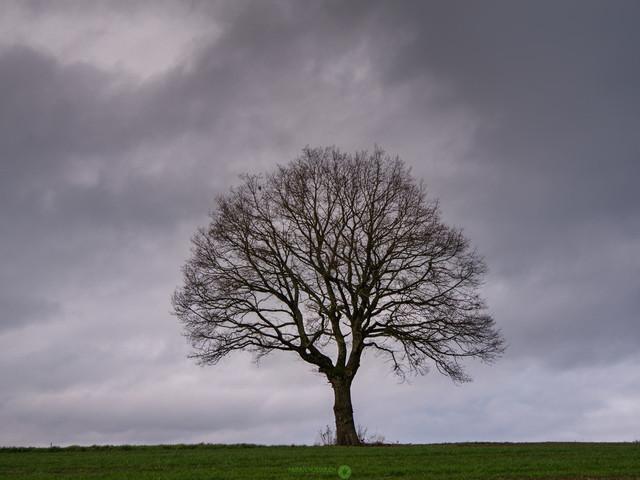 tree@winter