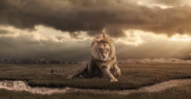 Löwe am Wasser