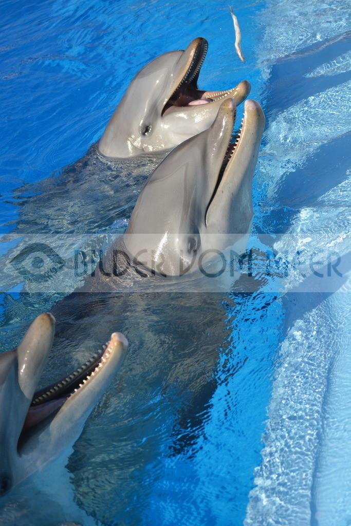 Bilder Delfine | Foto Delfin Spanien