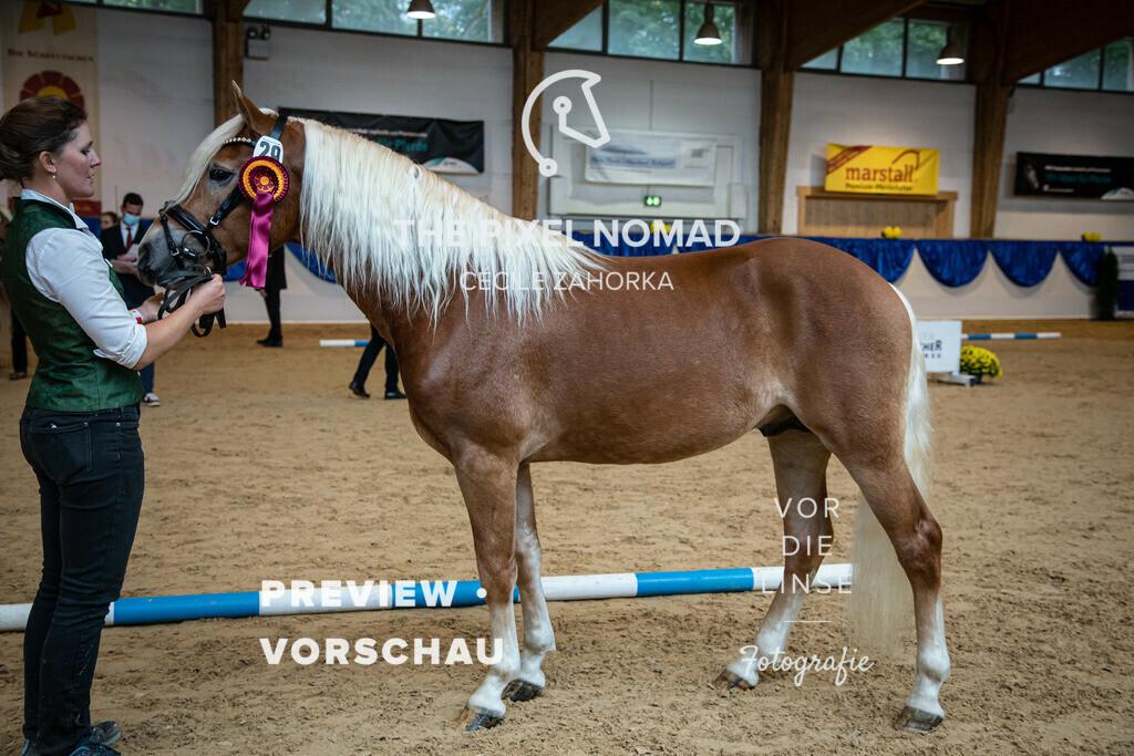 201011-KoerM-29-Adoro036   Adoro SCH v. Armani Ass, a.d. Meg Ryan SCH v. Nakuri Edelbluthaflinger Foto: www.vor-die-linse.de