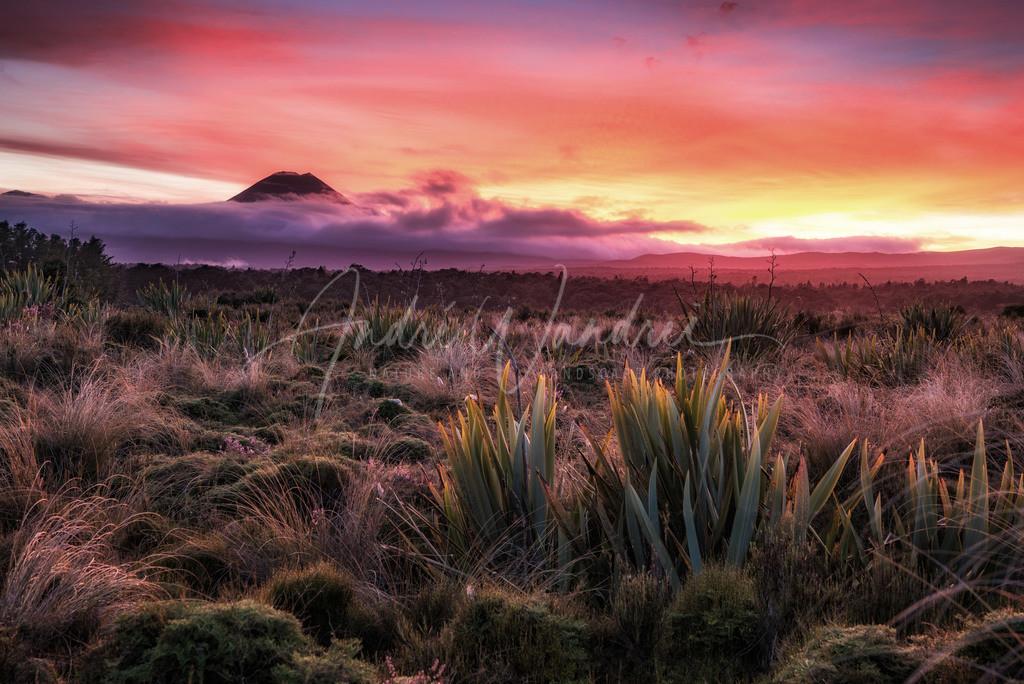 Brennender Himmel im Tongario Nationalpark