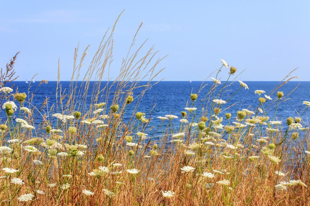 Sommer am Meer   Gräser an der Steilküste in Schönhagen