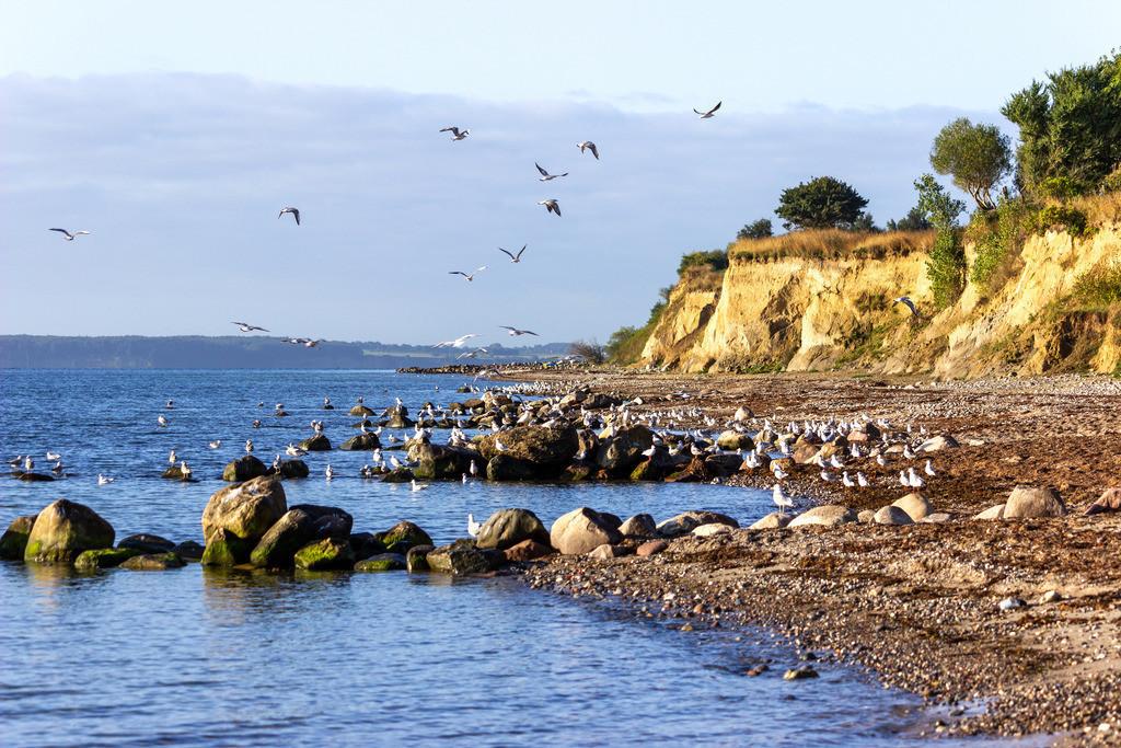 Steilküste in Waabs | Möwen an der Steilküste im Spätsommer