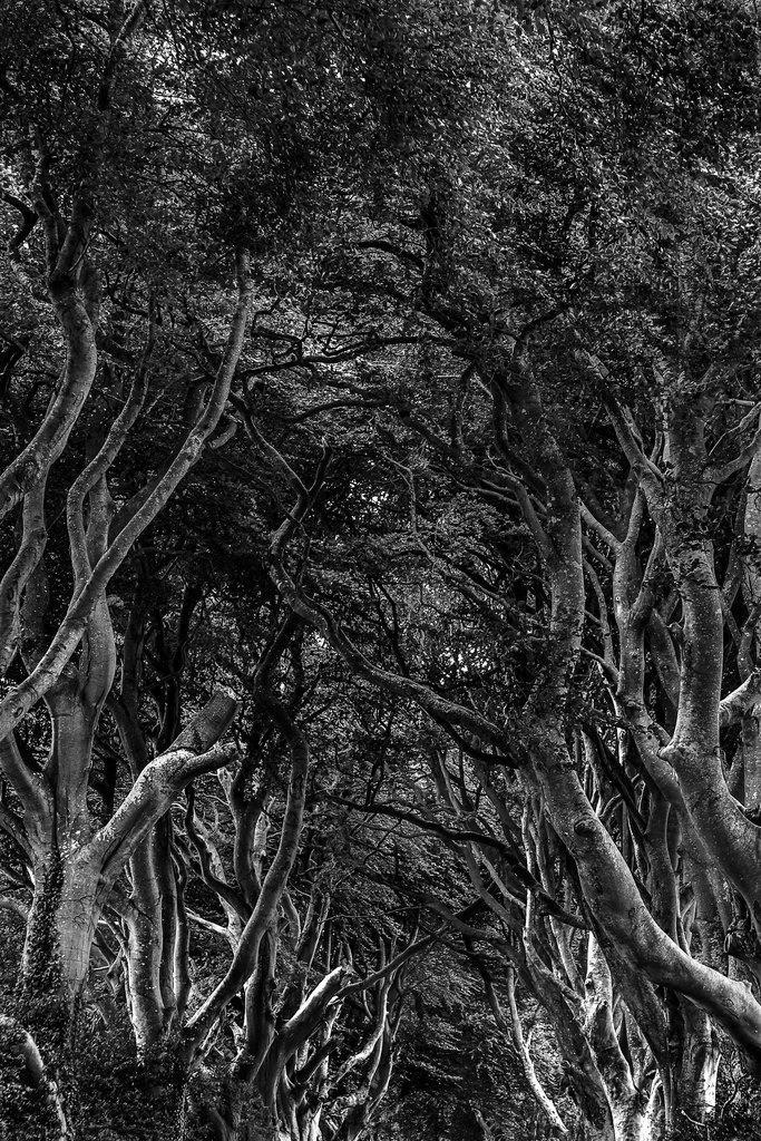 Bäume | Bäume in Nordirland der immer grünen Insel