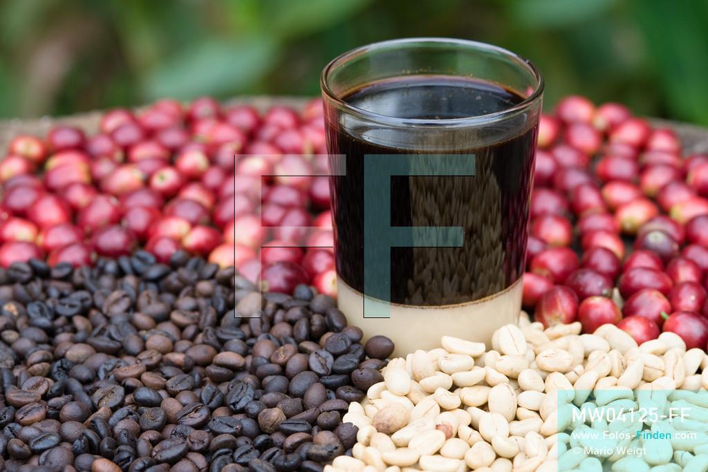 MW04125-FF | Laos | Paksong | Reportage: Kaffeeproduktion in Laos | Rote Kaffeekirschen sowie getrocknete und geröstete Kaffeebohnen. In der Mitte ein echter laotischer Kaffee (Coffee Lao), der mit gezuckerter Kondensmilch serviert wird. In den Plantagen auf dem Bolaven-Plateau gedeihen Sträucher der Kaffeesorten Robusta und Arabica.  ** Feindaten bitte anfragen bei Mario Weigt Photography, info@asia-stories.com **