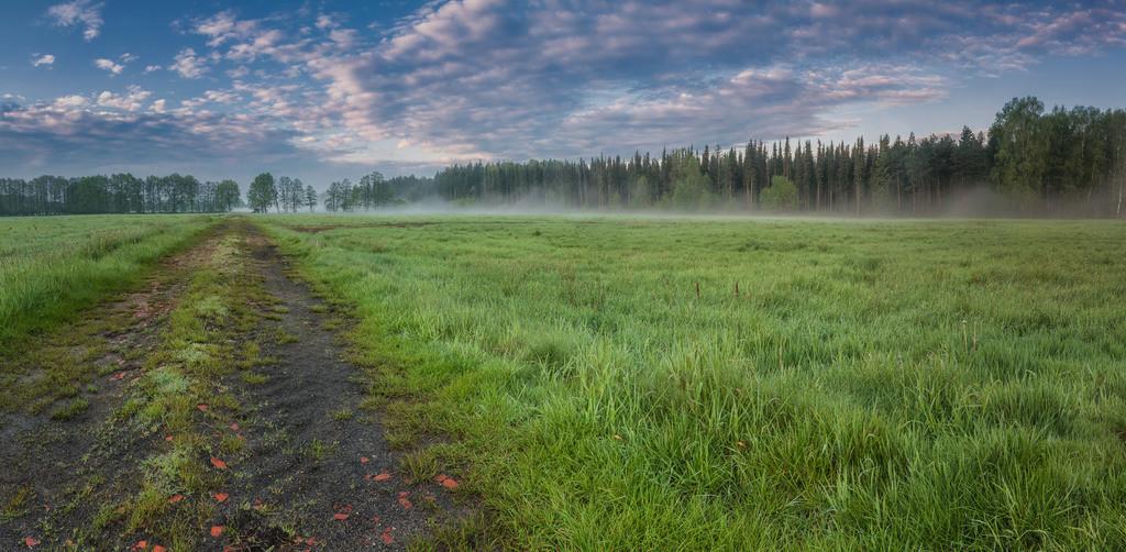 Morgens in Waakhausen | Leichter Nebel steigt in Waakhausen auf.