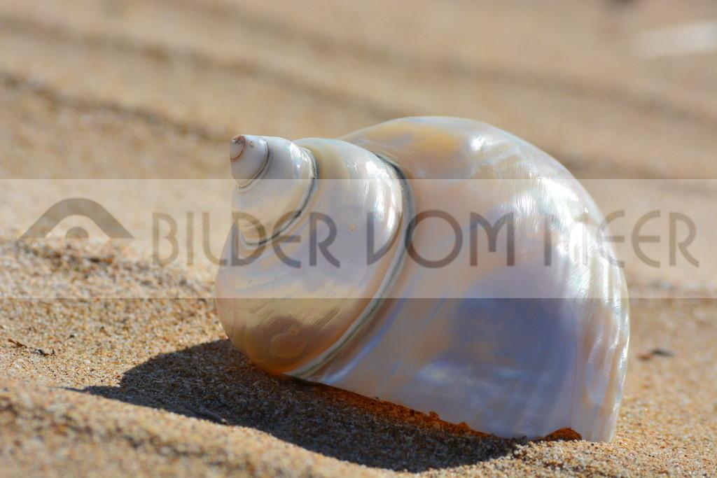 Muschel Bildeer im Sand | Muschelbilder vom Meer