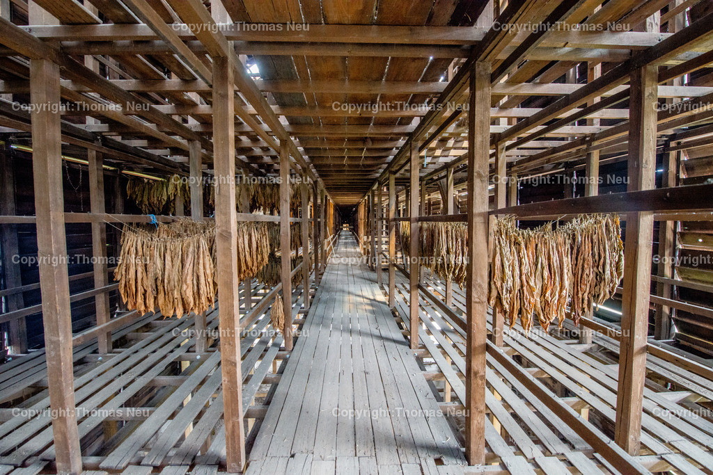 Tabakscheune-15 | Lorsch, Baustellenfuehung, Tabakscheune,, Bild: Thomas Neu