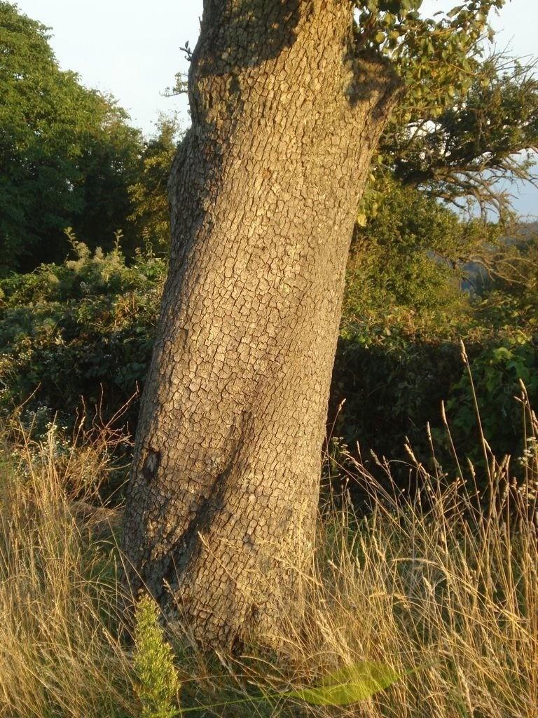 Kraftbaum mit starker Mitte