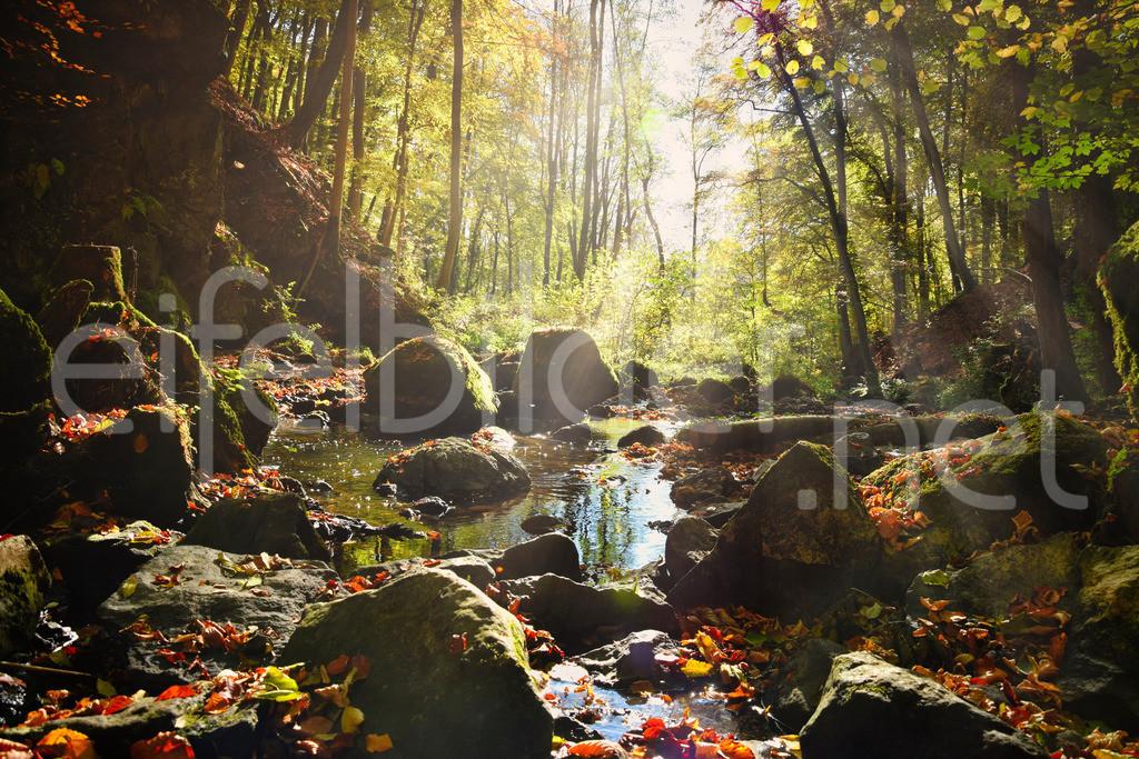 verträumte Stimmung am Alfbach | mystische Morgenstimmung mit buntem Herbstlaub