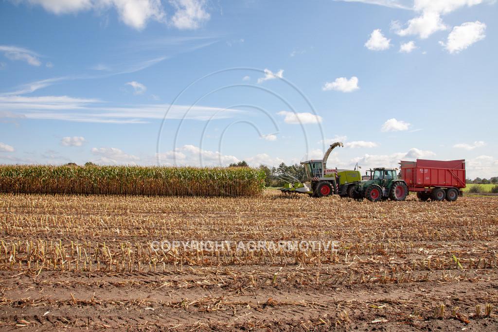 20080914-IMG_8978   Silomais wird gehäckselt - AGRARFOTO Bilder aus der Landwirtschaft
