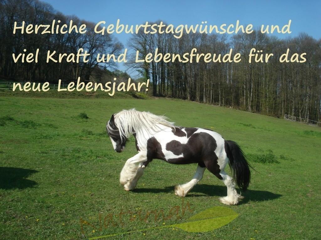 Geburtstagswünsche mit Pferd | Kraftvolle Geburtstagswünsche für Pferdeliebhaber