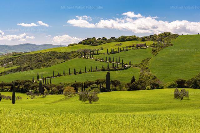 Frühling in der Toskana   Blick zum Agriturismo Podere Casanova bei Monticchiello in der Toskana mit einer kurvenreichen Straße und vielen Zypressen.