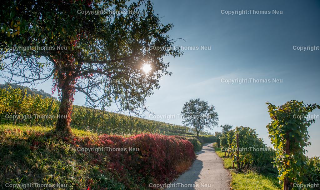 Heppenheim_Herbst   Heppenheim, Herbst in den Weinbergen zwischen Heppenheim und Bensheim, ,, Bild: Thomas Neu