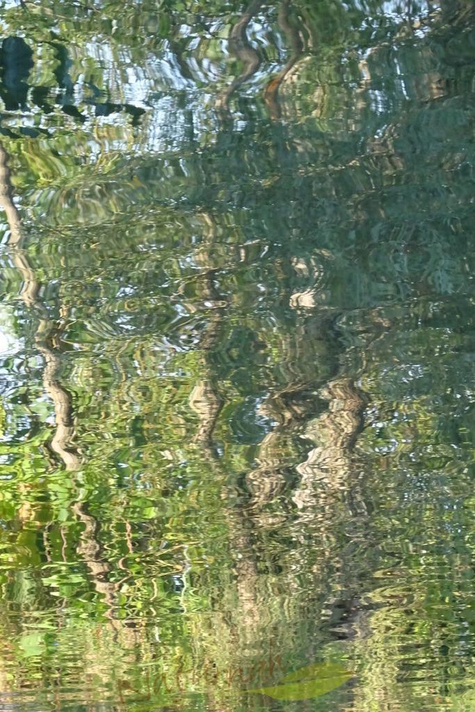 Tanzende Wasserbäume | Wer Wald und Wasser liebt findet hier eine fruchtbare Verbindung.