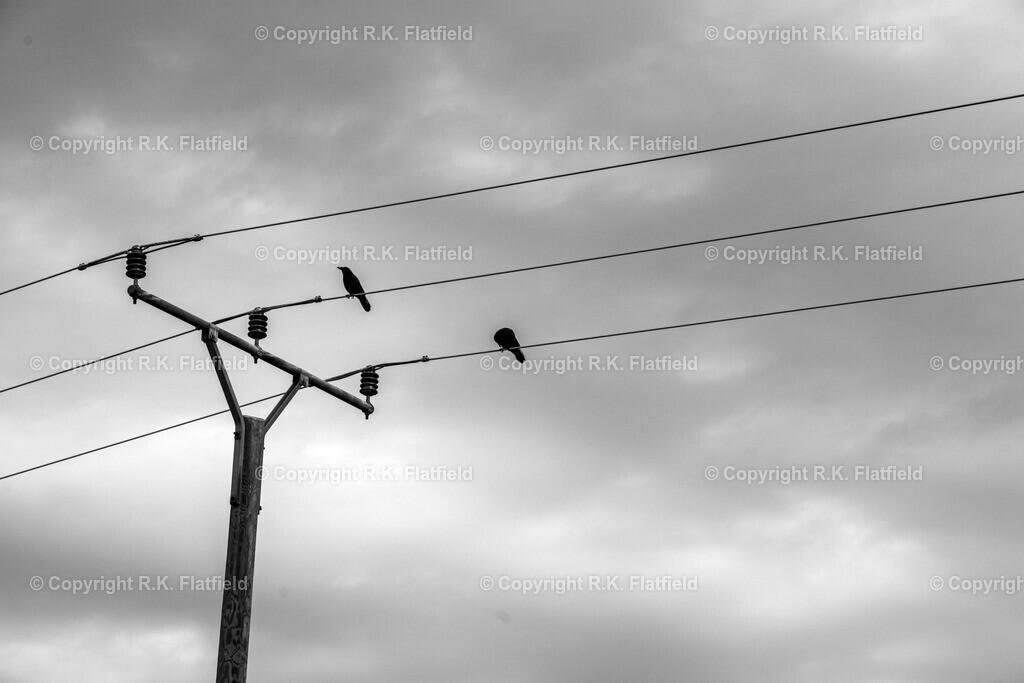 Krähen auf der Leitung