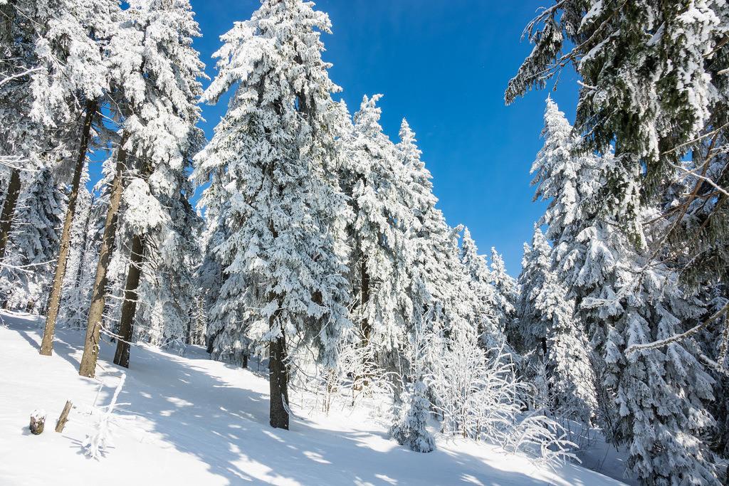 Winter im Riesengebirge bei Janske Lazne, Tschechien   Winter im Riesengebirge bei Janske Lazne, Tschechien.