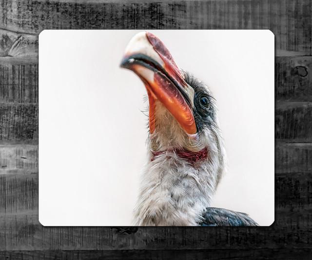 ROTSCHNABELTOKO | Kenia | Der Vogel aus dem Film