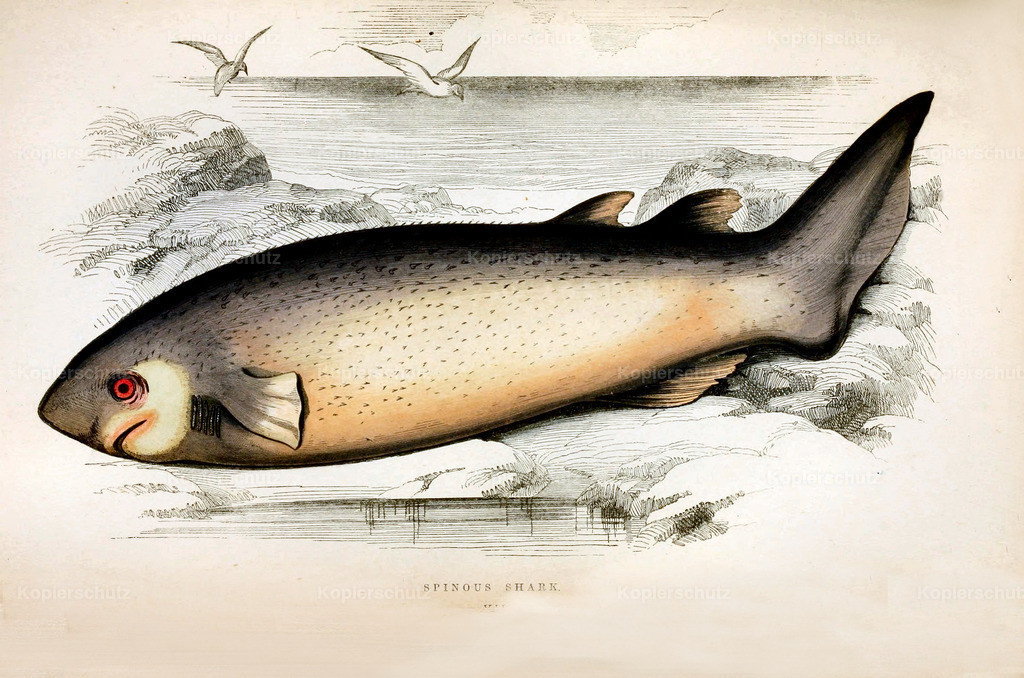 A-History-of-the -Fishes- of- the- British-Islands-Fische-1862-1866 (12)