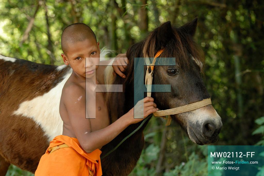 MW02112-FF   Thailand   Goldenes Dreieck   Reportage: Buddhas Ranch im Dschungel   Der junge Mönch Aa-Lu mit seinem Pferd Dee Dee   ** Feindaten bitte anfragen bei Mario Weigt Photography, info@asia-stories.com **