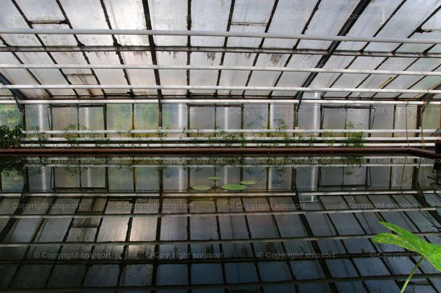 Treibhaus | Reflektionen im Wasser in einem Treibhaus aus Glas