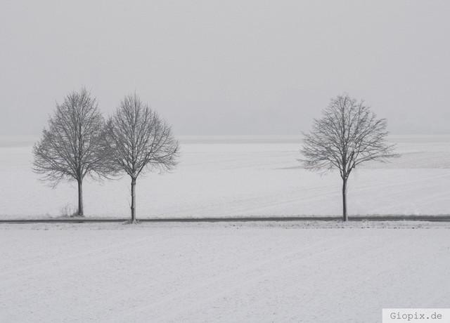 Drei Bäume im Schnee | Drei Bäum in einer winterlichen Landschaft mit Schnee in Raderbroich