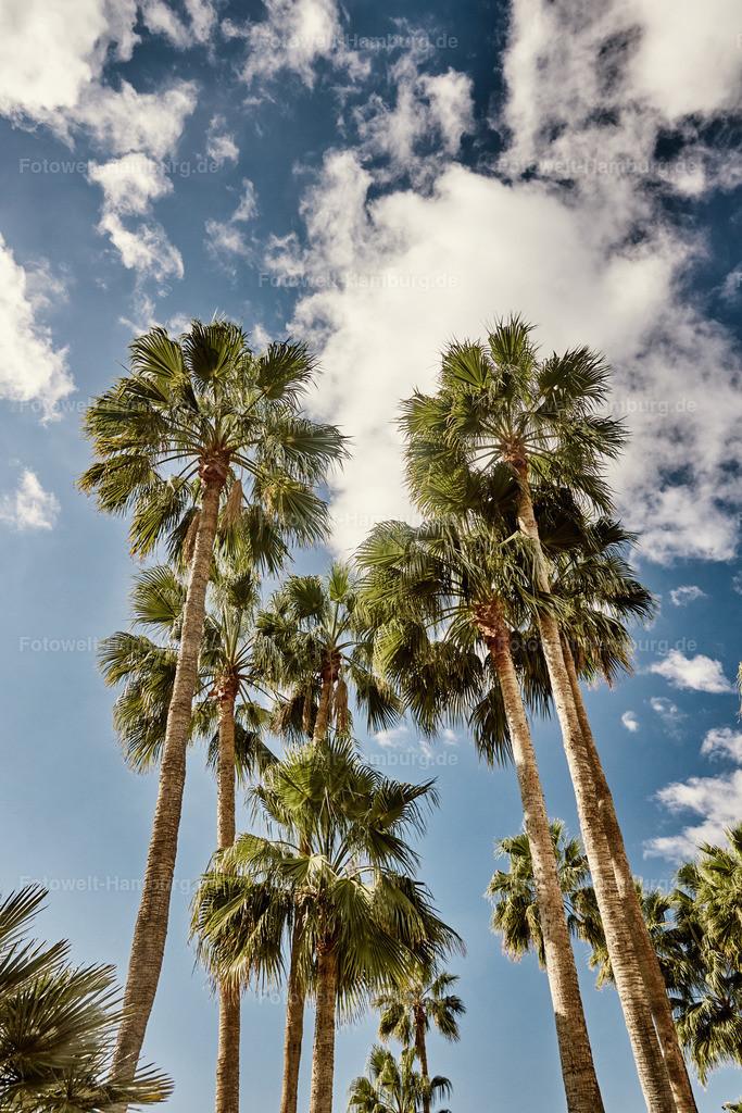 Palmenhimmel | Palmen auf Gran Canaria
