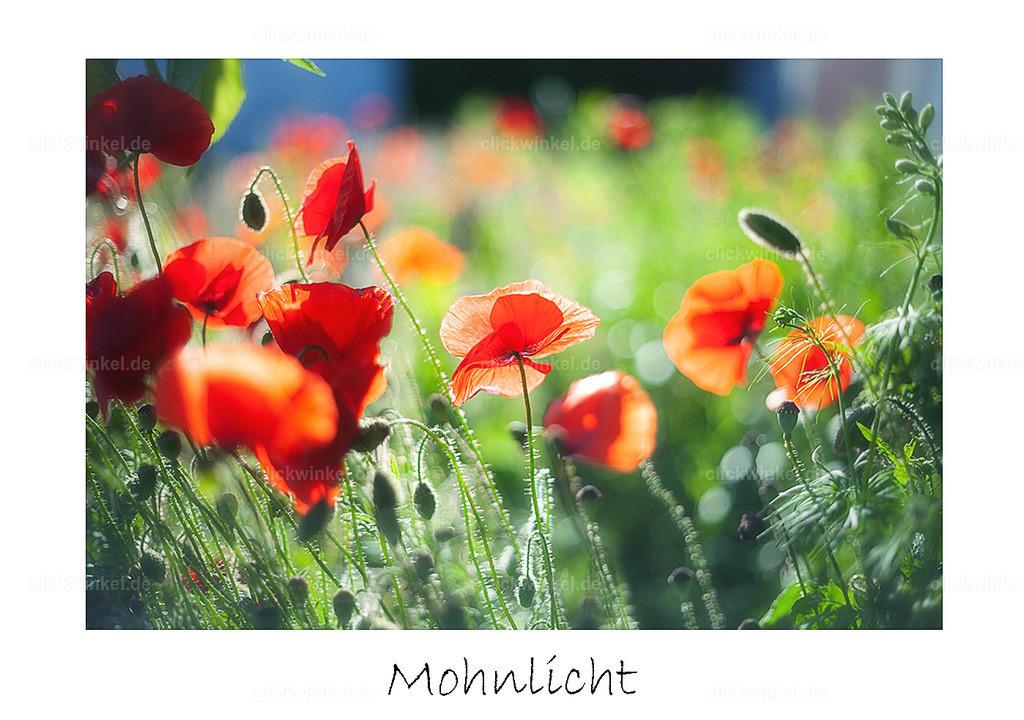 print_Mohnlicht