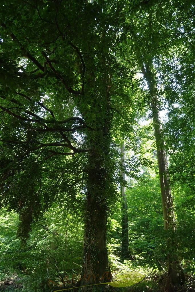 Waldgeflüster