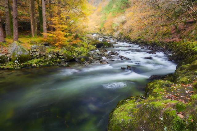 Fluss im Herbstwald | Nach einem ordentlichen Regenguss leuchten die Farben des Waldes richtgehend auf. Der Fluss rauscht über Felsen durch die Herbstlandschaft und bildet kleine Strömungskreisel.