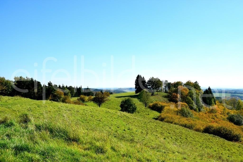 Landschaft bei Daun Schalkenmehren   Herbst in der Vulkaneifel