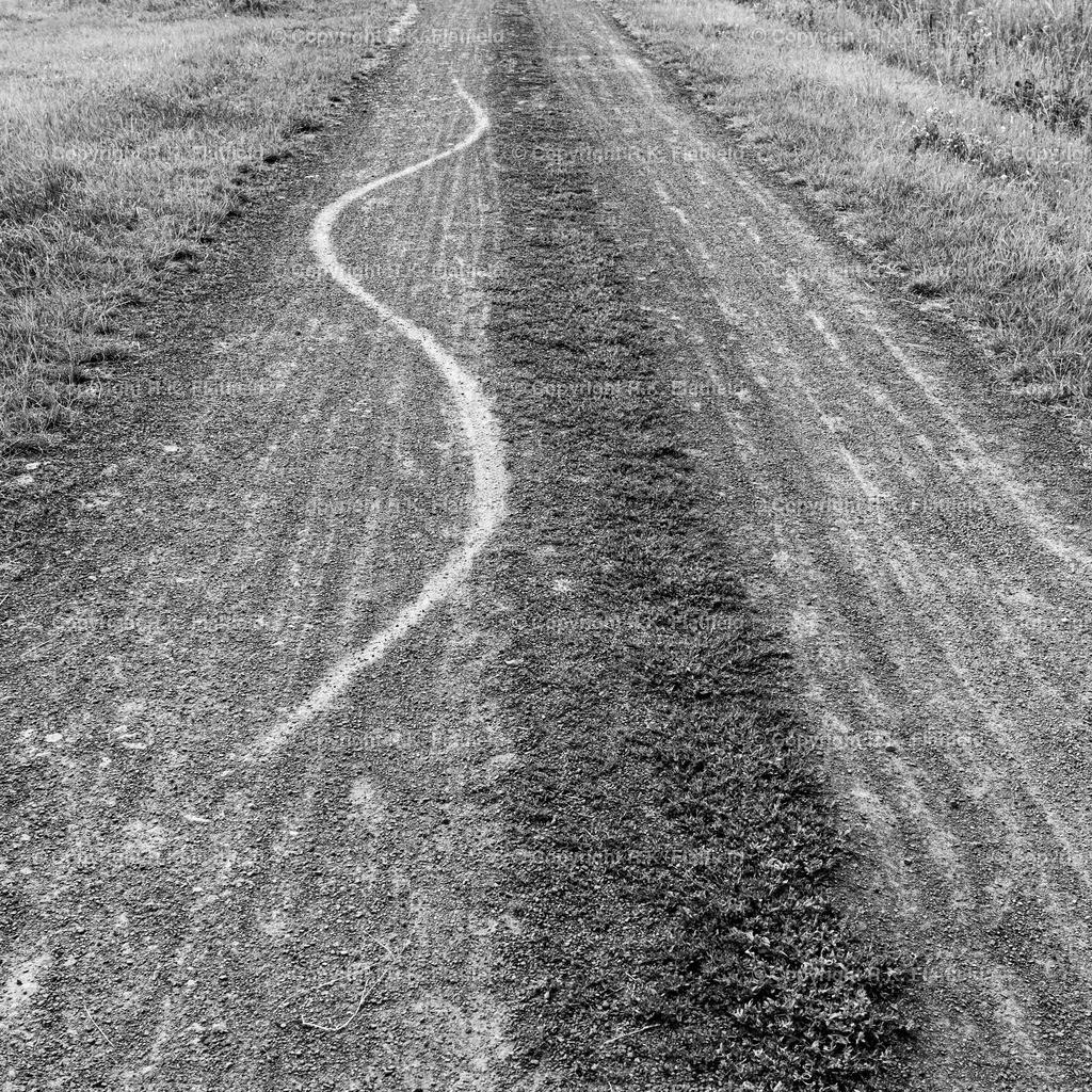 Weg mit Schlangenspuren | Mittelhessen