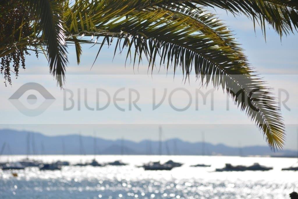 Bilder vom Meer San Pedro del Pinatar   Palmen über dem Meer