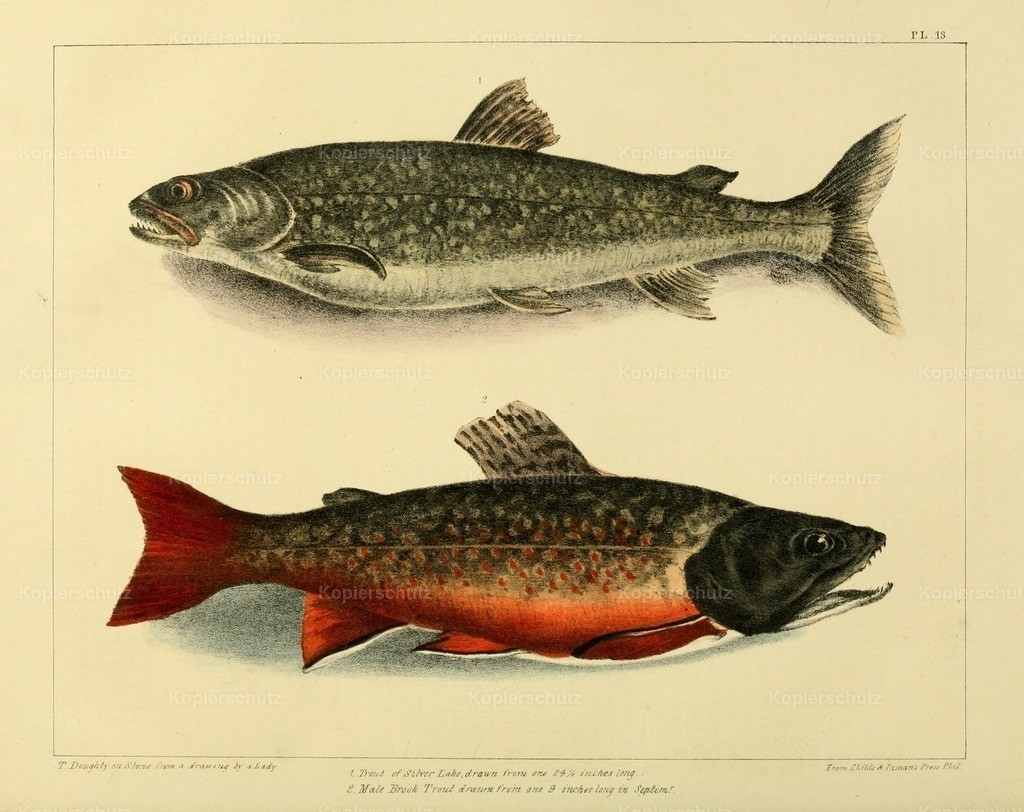 Doughty_ T. (1793-1856) - Cabinet of Natural History 1830 - Trout