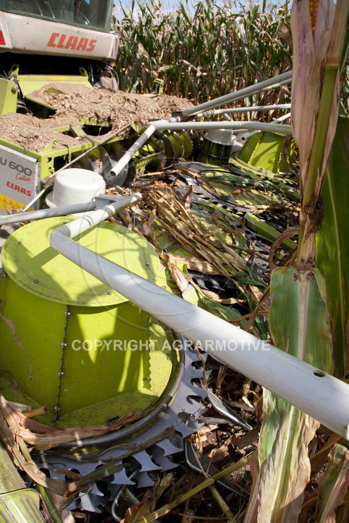 20080914-IMG_9028 | Silomais wird gehäckselt - AGRARFOTO Bilder aus der Landwirtschaft