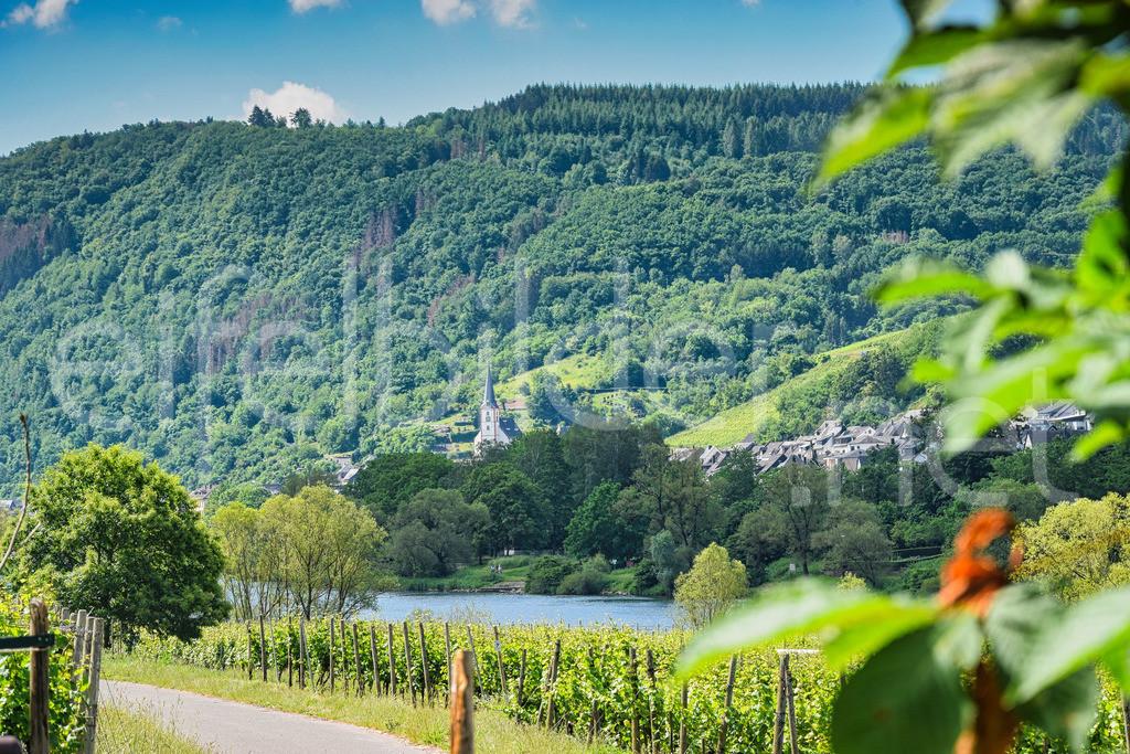 Mosel, Weinbau Landschaft  | idyllische Weinbau Landschaft, fotografiert zwischen den Dörfern Pünderich und Briedel bei Zell an der Mosel
